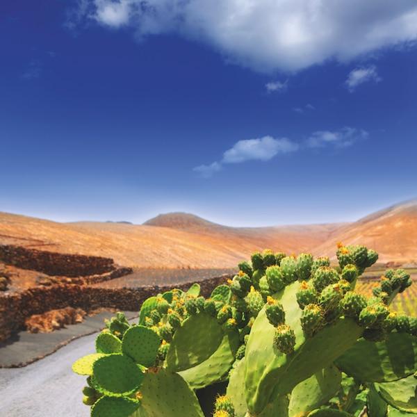 Lanzarote: luieren, lava & kunst