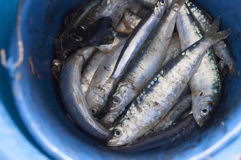 De vissersdorpen van Catalonië