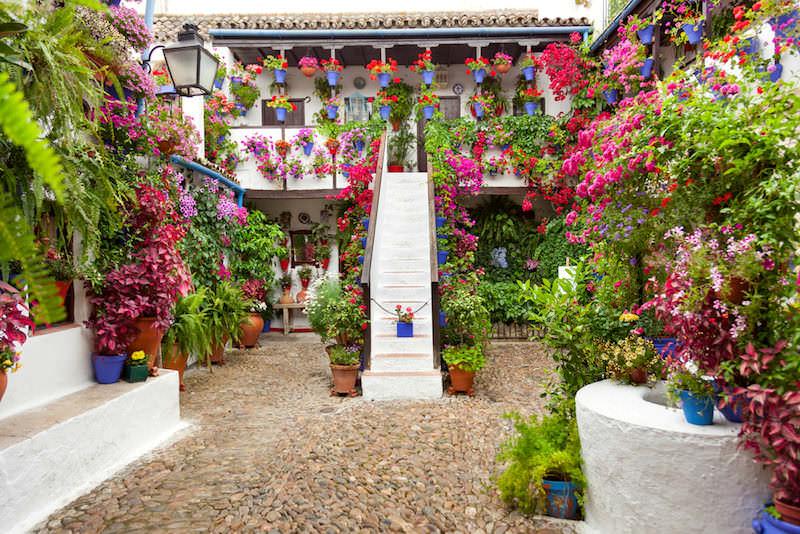 patio festival córdoba