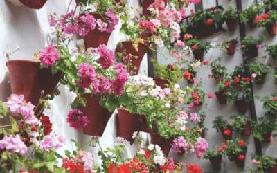 Córdoba: ciudad multicultural de los patios