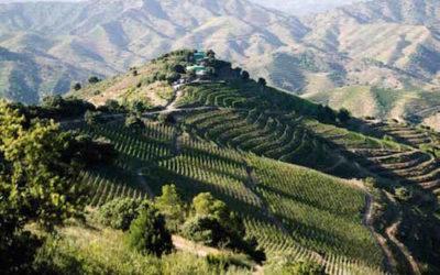 Puur prachtig Priorat: wijn en wandelen