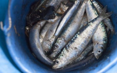 Los pueblos pesqueros de Cataluña