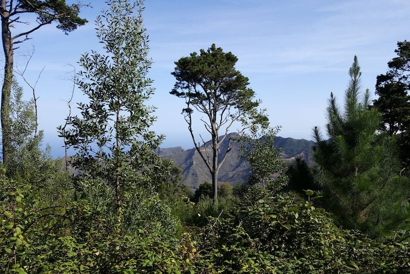 Etteke tipt: wandelen in Bosque de las Mercedes