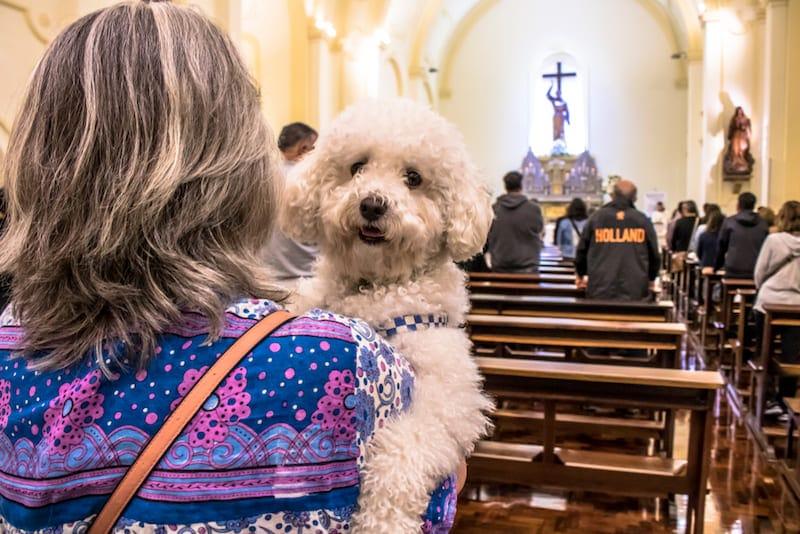 Met je huisdier naar de kerk op de Dag van San Antonio