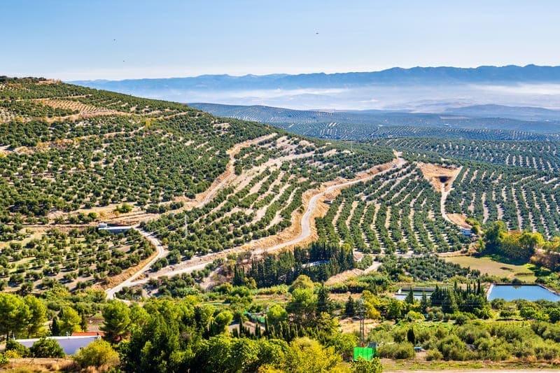 Spaanse Vertaling: Andalucía encantadora Baeza y Úbeda