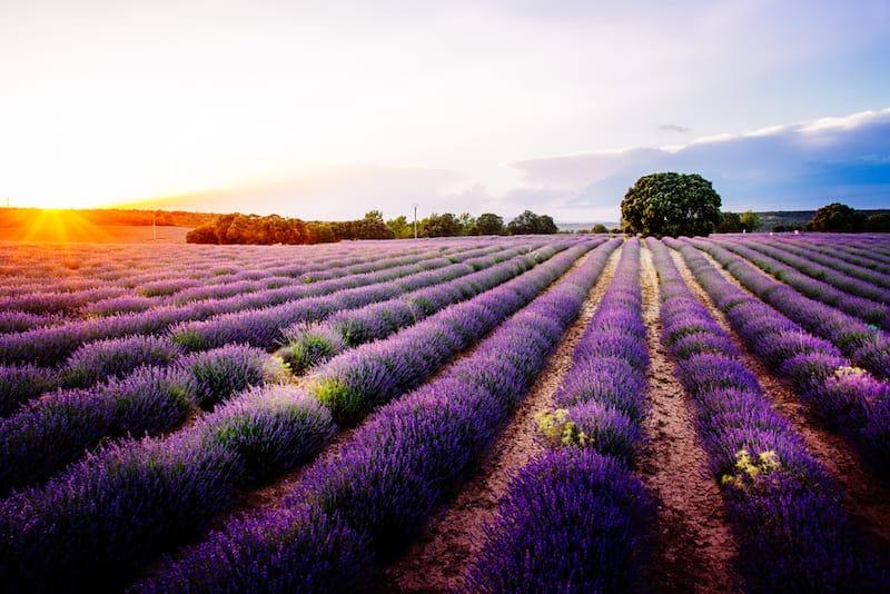 Tussen de lavendel in Brihuega