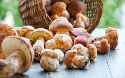 3 x Spaans recept met paddenstoelen en zwammen