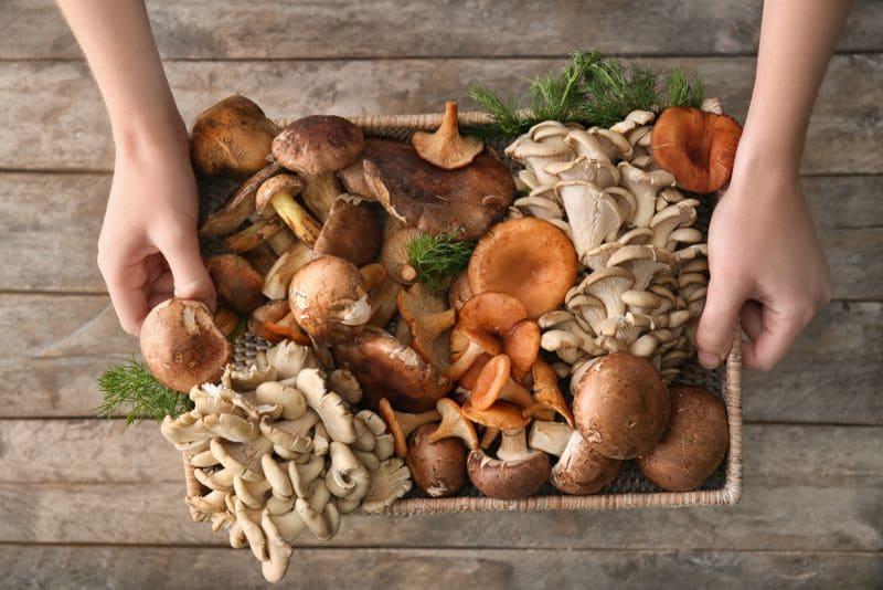 bak-met-paddenstoelen