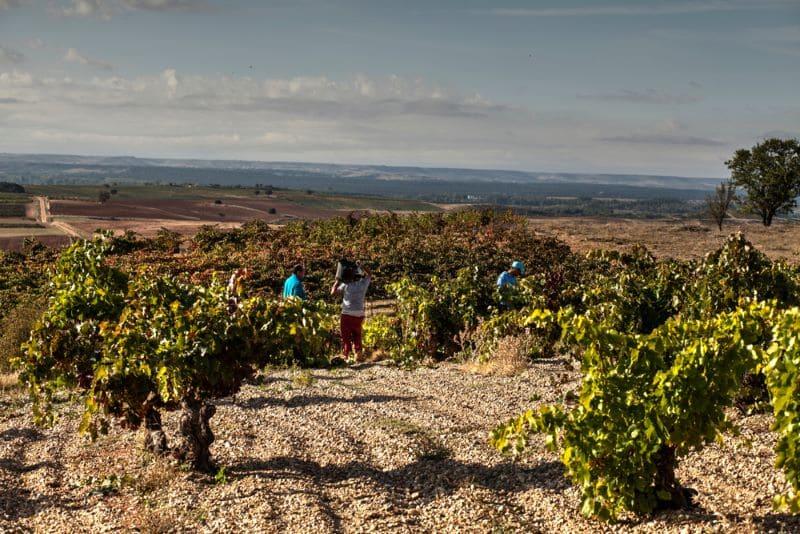 wijnvelden-in-regio-burgos
