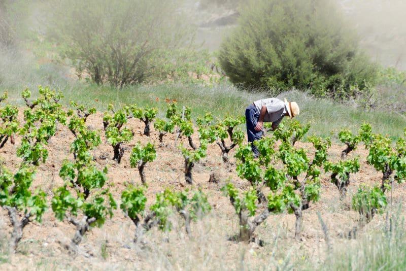 wijnveld-in-burgos-spanje