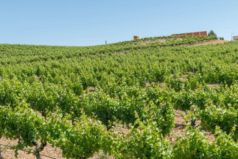 wijnveld-bodegas-villacreces