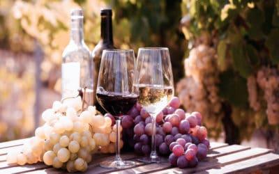 Proeven & genieten: wijntoer door Catalonië