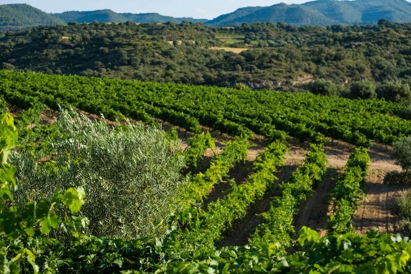 Wijnveld in het gebied Somontano in Huesca