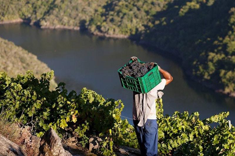 Geheime wijnhuizen in Galicië