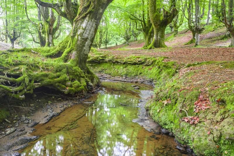 Parque Natural del Gorbea Spanje